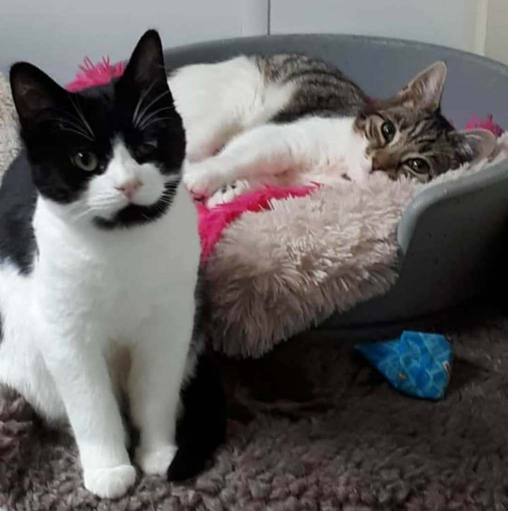Chewit and Jazzie - Scratching Post